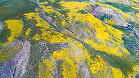Wildflower blooms in the Temblor Range, Carrizo Plain National Monument, California