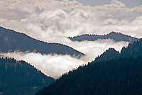 Billowy white clouds fill mountain valleys, viewed from Sunrise Point in late morning light. Highway 123 is visible in the lower left corner. Mount Rainier National Park, Washington State.....Photographed on digital media.