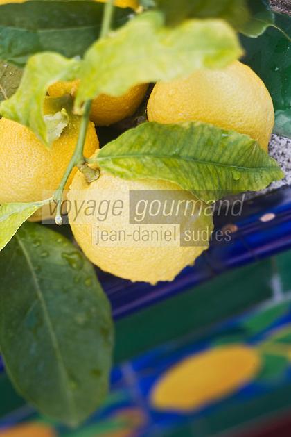 Europe/France/06/Alpes-Maritimes/Menton:  Citrons de Menton photographiés sur les céramiques polychromes du Jardin de Fontana Rosa de l'écrivain espagnol Vicente Blasco Ibanez.<br /> S