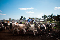 Dec. 14, 2011 - Yopal, Colombia. A llanero (cowboy) musters cattle in the yard. © Nicolas Axelrod / Ruom