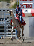 Ky Sisson races in the 59th Annual International Camel &amp; Ostrich Races in Virginia City, Nev., on Friday, Sept. 7, 2018. <br /> Photo by Cathleen Allison/Nevada Momentum