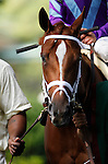 July 12, 2014: Delaware Handicap contender Princess of Sylmar walks in the paddock before the race. Belle Gallantey, Jose Ortiz up, wins the Grade I Delaware Handicap at Delaware Park in Stanton Delaware. Trainer is Rudy Rodriguez; Owners are Michael Dubb, Bethlehem Stabes LLC and Gary Aisquith ©Joan Fairman Kanes/ESW/CSM