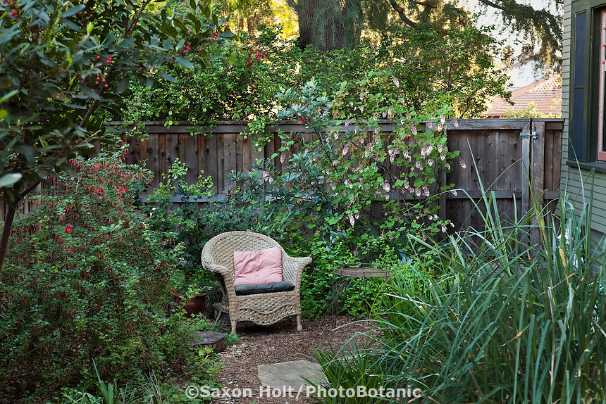 Backyard lounge chair amidst currant shrubs (Ribes) and Carex spissa in Southern California, drought tolerant native plant garden