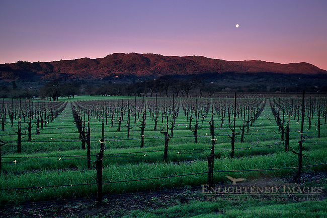 Moonset at dawn over barren vineyard and hills, Valley of the Moon, Sonoma County, California