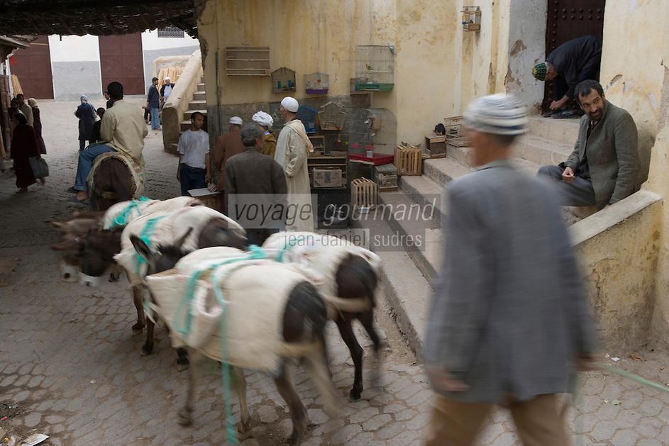 Afrique/Afrique du Nord/Maroc/Fèz: Dans la médina de Fèz-El-Bali un convoi de petits anes qui servent au transport des marchandises