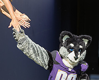 Harry the Husky high-fives fans as he enters the stadium.