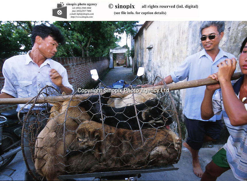 Dogs are delivered to a restaurant by locals in Hanoi. Dogs meat is considered a delicacy in Vietnam with increasing numbers being illegally stolen and shipped across the border from Thailand.