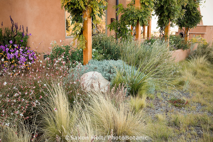 Xeriscape naturalistic garden by adobe house in Santa Fe, New Mexico with Gaura, Threadgrass, Beargrass (Nolina microcarpa), Blue Grama Grass