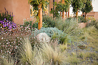 Xeriscape naturalistic garden by adobe house in Santa Fe, New Mexico with Gaura, Threadgrass, Beargrass (Nolina microcarpa), Blue Grama Grass
