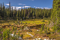 Landscape scenic, art photograph, of the Meadows in the Sky Parkway which contains forests of cedar and hemlock, spruce and fir trees that is located in Mount Revelstoke National Park near the City of Revelstoke, in British Columbia, Canada.