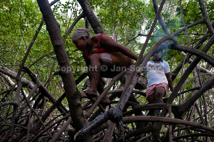 Colombian girls climb over the tree roots while searching for shellfish in the mangrove swamps on the Pacific coast, Colombia, 12 June 2010. Deep in the impenetrable labyrinth of mangrove swamps on the Pacific seashore, hundreds of people struggle everyday, searching and gathering a tiny shellfish called 'piangua'. Wading through sticky mud among the mangrove tree roots, facing the clouds of mosquitos, they pick up mussels hidden deep in mud, no matter of unbearable tropical heat or strong rain. Although the shellfish pickers, mostly Afro-Colombians displaced by the Colombian armed conflict, take a high risk (malaria, poisonous bites,...), their salary is very low and keeps them living in extreme poverty.
