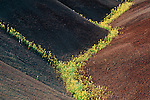 John Day Fossil Beds National Monument, OR<br /> Patterns of the Painted Hills with yellow Bee Plant and Chaenactis