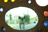 An angry chihuahua barks at the closed door of the unusual shell-shaped house built by Senosian Arquitectos in 2005. Naucalpan, Estado de Mexico, Mexico. Monday, March 31, 2008