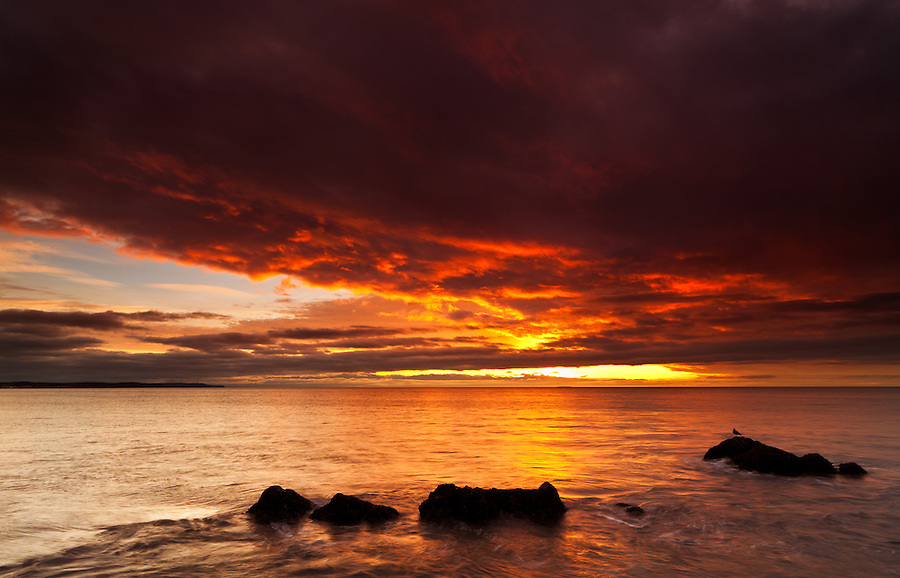 A single seagull sits on a rock during a sunset seen from the shore of Whidbey Island, Washington State.