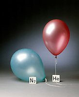 HELIUM &amp; NITROGEN FILLED BALLOONS (2 of 5)<br /> The Two Balloons After 12 Hours<br /> After 12 hours the helium filled balloon is smaller than the nitrogen filled balloon. Helium effuses out of the balloon faster than nitrogen.  Light atoms or molecules effuse through the pores of the balloons faster than heavy atoms or molecules.