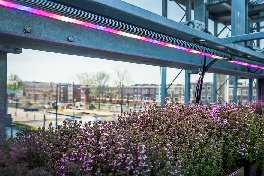 Nederland, Utrecht, 20180419<br /> The Green House, een duurzaam restaurant in Utrecht. Alle gebruikte materialen zijn gerecycled en op de bovenverdieping is een kas waar sla en kruiden worden geteeld. Dat scheelt een grote koeling en de klant krijgt iets dat heel erg vers is.<br /> Ledlicht zorgt dat de planten goed groeien.<br /> <br />  Foto: (c) Michiel Wijnbergh