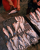 PERU, South America, Latin America, high angle view of dead fishes for sale at Belleavista Market