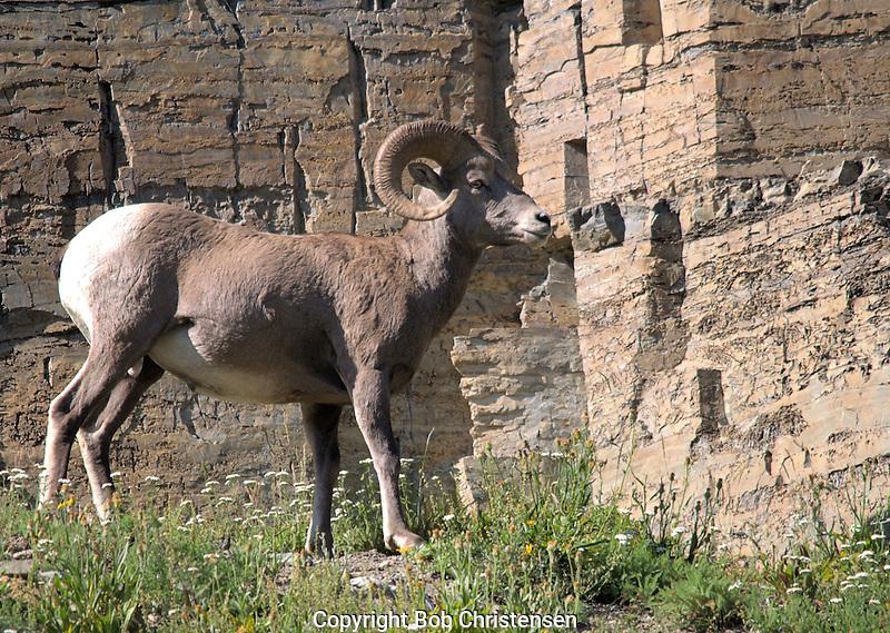 Wildlife Photos from Montana & Wyoming