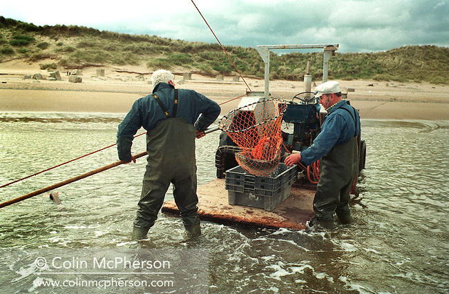Fishermen harvesting a salmon from a 'jumper' or bag net on the sands at Kinnaber, Angus. The nets have double bags, allowing the fishermen to retrieve the trapped fish on foot in the nets nearest the coast, and by boat in the nets further out in the sea. These nets are the last of their kind on Scotland's east coast, where fish stocks have declined sharply over recent years. The once-thriving Scottish salmon netting industry fell into decline in the 1970s and 1980s when the numbers of fish caught reduced due to environmental and economic reasons. By 2007, only a handful of men still caught wild salmon and sea trout using traditional methods, mainly for export to the Continent.
