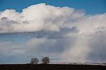 Cottonwood tress with clouds, shadow, light. U.S. 50, Ragtown, Nev.