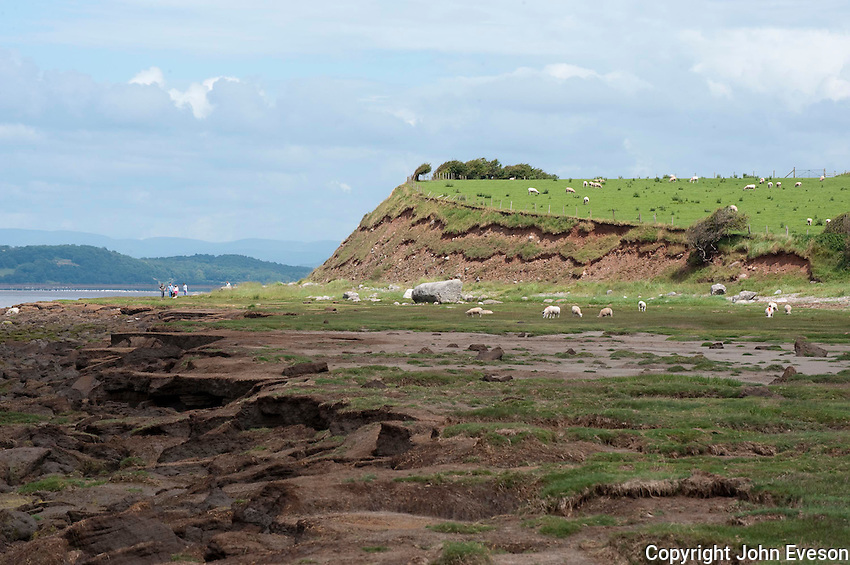 Erosion of coastal land, Bolton le Sands, Morecambe Bay, Lancashire.