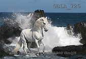 Bob, ANIMALS, collage, horses, photos(GBLA725,#A#) Pferde, caballos