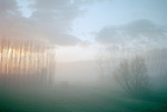 Dawn breaking through the countryside <br /> fog in Veneto, Italy