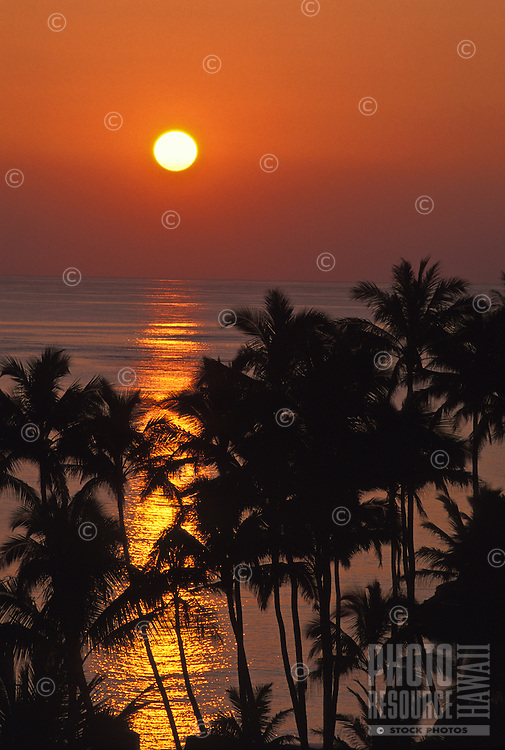 Sunrise with palm trees at Lanikai, windward Oahu