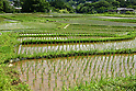 Planting season in largest terraced rice-fields in Saitama, Japan