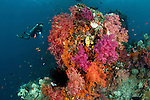 Soft corals with diver in the background. Misool, Raja Ampat, West Papua, Indonesia,  January 2010