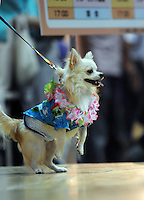 Bell at the Osaka Pet Expo and fashion show, Osaka.<br /> 25-Sep-11<br /> <br /> Photo by Richard Jones