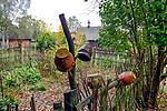 Garnki suszące się na plecionym płocie otaczającym ogród chałupy ze wsi Podolsze. W tle kościół ze wsi Ryczów z początku XVII wieku