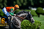 AUG 24: Ya Primo races in the Sword Dancer Stakes at Saratoga Racecourse in New York on August 24, 2019. Evers/Eclipse Sportswire/CSM