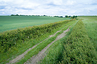 Aerial view of public bridleway - Cambridgeshire, May