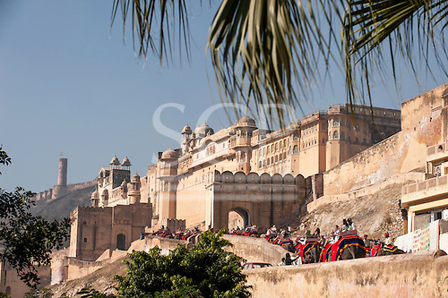 Jaipur, India. The Amber Fort. Elephant ride up.