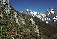 Europe/France/Midi-Pyrénées/09/Ariège/Couserans: Rhododendrons au col de Pause et Mont-Valier