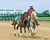Pony at Delaware Park on 6/8/17