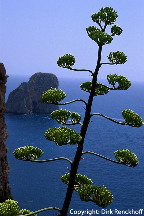 Italien, Capri, Blick von Via Krupp