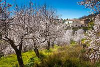 Spanien, Mallorca, bei Es Capdella: Finca umgeben von bluehenden Mandelbaeumen | Spain, Mallorca, near Es Capdella: Finca surrounded by almond blossom