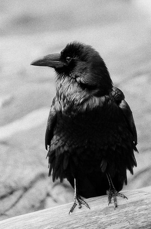Raven 2017, Ilford Delta Film