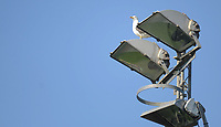 A seagull sits atop the floodlights at Belle Vue<br /> <br /> Photographer Kevin Barnes/CameraSport<br /> <br /> UEFA Europa League 2nd Qualifying Round 1st Leg - Connah's Quay Nomads v Partizan Belgrade - Thursday July 25th 2019 - Belle Vue Stadium - Rhyl<br />  <br /> World Copyright © 2019 CameraSport. All rights reserved. 43 Linden Ave. Countesthorpe. Leicester. England. LE8 5PG - Tel: +44 (0) 116 277 4147 - admin@camerasport.com - www.camerasport.com