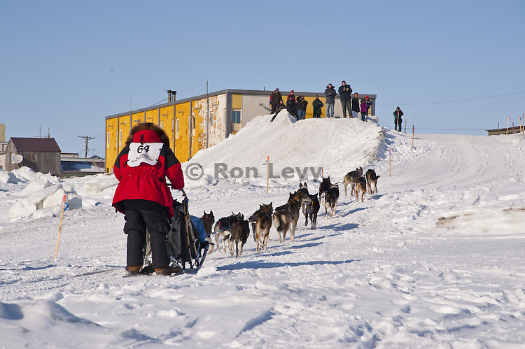 Musher Art Church, Jr arriving into Nome, Alaska during Iditarod Dogsled Race, 2012