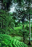 776003013 stream and native plants in rainforest costa rica