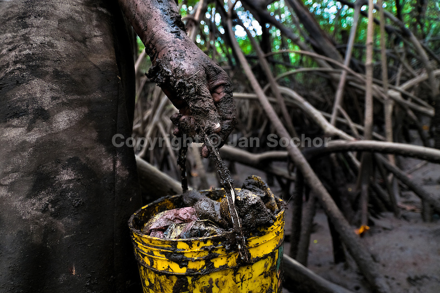 A Colombian woman holds a muddy bucket filled by shellfish, collected in the mangrove swamps on the Pacific coast, Colombia, 16 June 2010. Deep in the impenetrable labyrinth of mangrove swamps on the Pacific seashore, hundreds of people struggle everyday, searching and gathering a tiny shellfish called 'piangua'. Wading through sticky mud among the mangrove tree roots, facing the clouds of mosquitos, they pick up mussels hidden deep in mud, no matter of unbearable tropical heat or strong rain. Although the shellfish pickers, mostly Afro-Colombians displaced by the Colombian armed conflict, take a high risk (malaria, poisonous bites,...), their salary is very low and keeps them living in extreme poverty.
