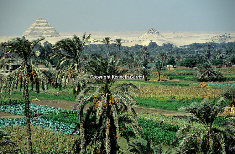 Egypt's Old Kingdom; Djoser's step pyramid complex rises beyond; lush farm land; Saqqara; Egypt, agricultural flood plain; 3rd Dynasty; Mudbrick step pyramid; designed by Imhotep for King Djoser
