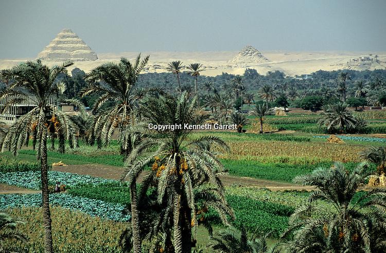 Egypt's Old Kingdom; Djoser's step pyramid complex rises beyond; lush farm land; Saqqara; Egypt, agricultural flood plain; 3rd Dynasty; Mudbrick step pyramid; designed by Imhotep for King Djoser