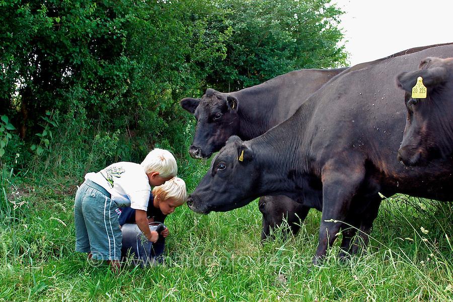 Kind, Kinder füttern Kühe, Kuh, Rind, Rinder, Bauernhof, Bio-Bauernhof, Deutsche Angus, Angusrind, Angus-Rind, cattle