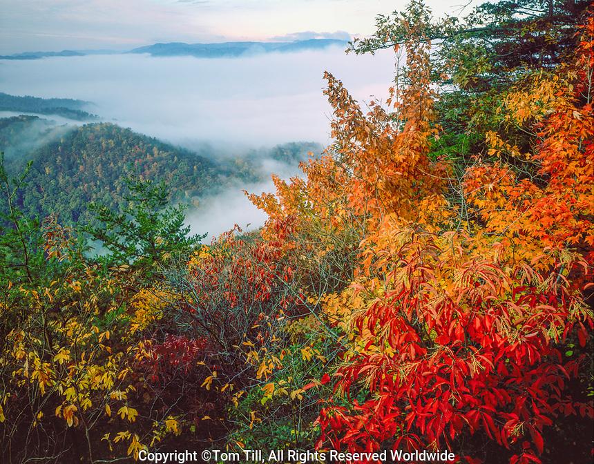 Foggy morning, Cumberland Gap National Historical Park, Tennessee, Virginia, Kentucky