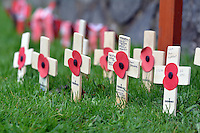 Crosses and poppies on a green for Remembrance Day Sunday in Pembroke, west Wales, UK. SUnday 13 November 2016