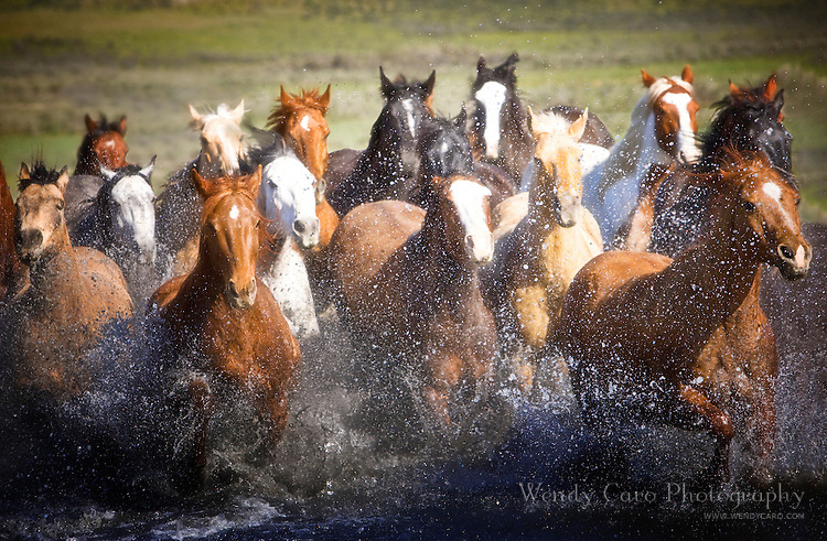 Herd of horses galloping out of a pond